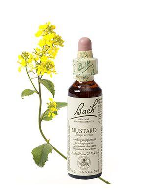 Bach Mustard / Herik 20 ml 21