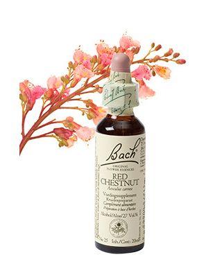 Bach Red Chestnut / Rose kastanje 20 ml 25